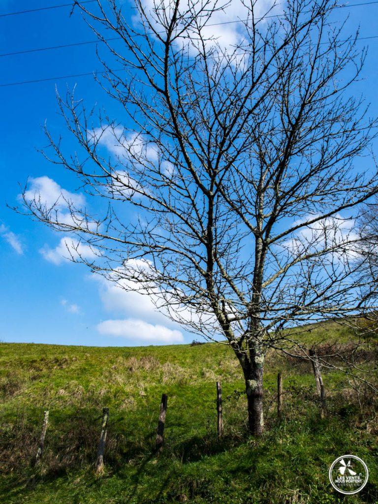 arbre solitaire près du moulin d'urt au pays basque
