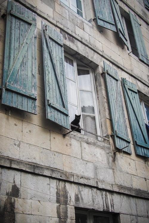 chat noir a la fenêtre aux volets bleus a bayonne au pays basque