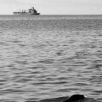 lion de mer à valparaiso en voyage au chili